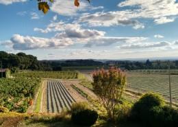 Vue de la terrasse sur Vignes et Lavandes - Gîtes et Chambres d'hôtes - Les Terrasses du Soleil