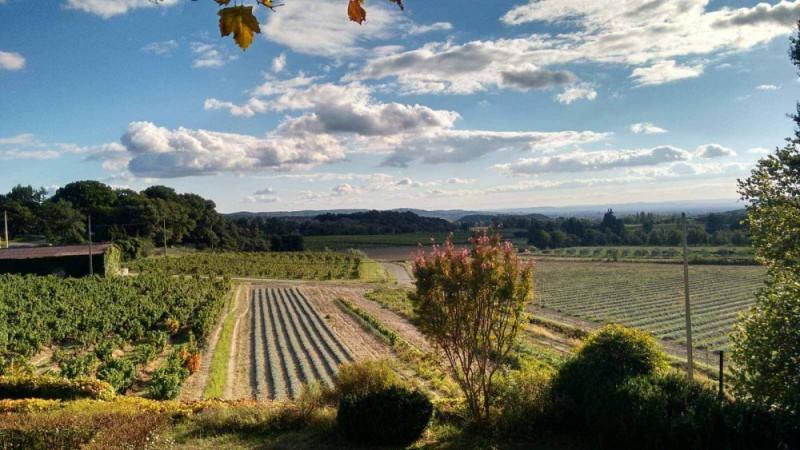 Vue Vignes et Lavandes - gîtes et chambres d'hôtes Les Terrasses du Soleil